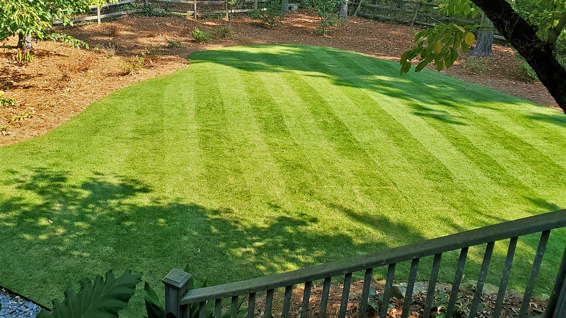 A professionally mowed lawn with lawn striping.