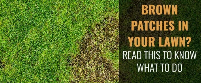Brown Or Large Patches In Your Lawn This Summer? It Might Be Disease!