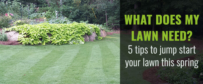 Learn Why You Should Assess Your Lawn Maintenance Needs Early