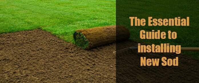 The Essential Guide to Installing New Sod