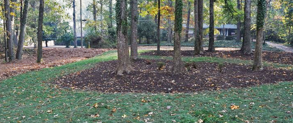 Fall leaves that have been removed from a lawn in Woodstock.