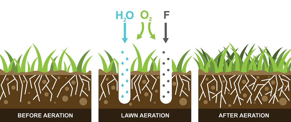 How aeration improves your lawn graphic.