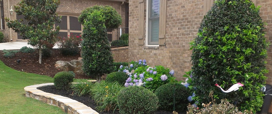 Shrubs, small, trees, and bushes trimmed by our team at a home in Roswell.