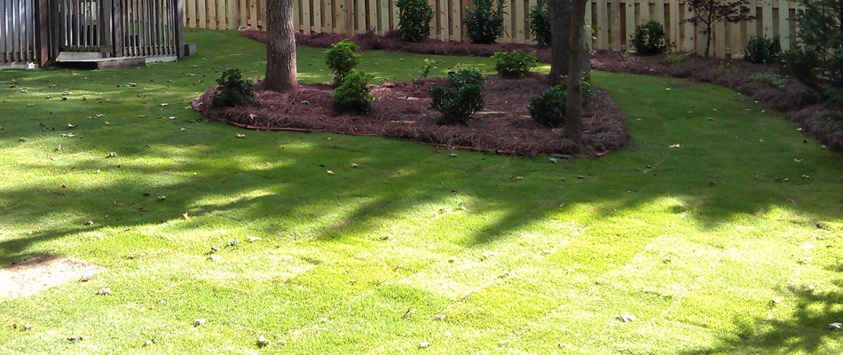 A new lawn we installed at a residential property.